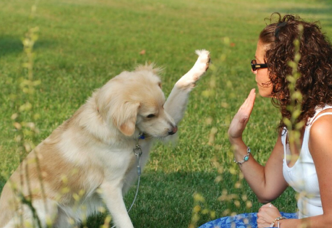 saludo perro