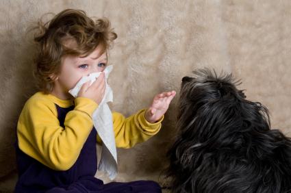 perro-alergia-niño