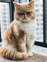 ¿Por qué ronronean los gatos? Las razones te pueden sorprender