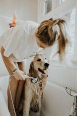 Bañar en exceso a los perros puede dañar su piel