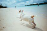 El agua del mar puede provocar intoxicaciones en los perros