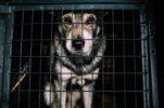 140.000 perros y gatos abandonados cada año