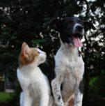 6 pasos para que un perro y un gato se lleven bien